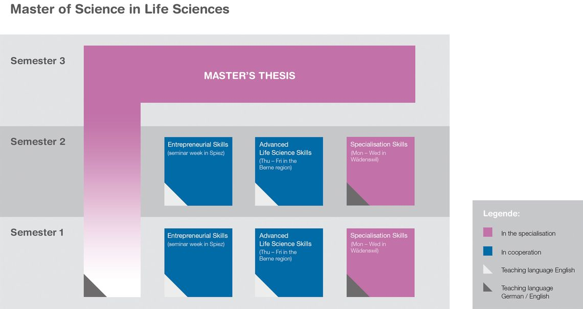 General structure of a full time Master     s programme  Students determine the actual sequence and focal points themselves