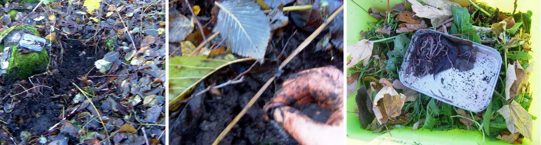Worm composting - Step 1 to 3