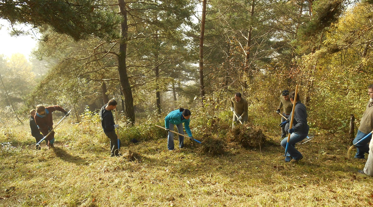 Picture of a corporate volunteering day in a Swiss Nature Park